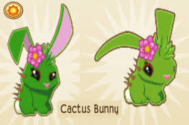 File:Cactus bunny.jpg
