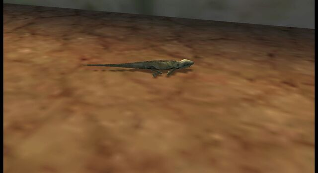 File:Another iguana 27.jpg