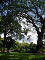 Foster Botanical Garden (general view) - Honolulu, HI-1-