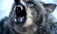 Teen Wolf 3x14 006
