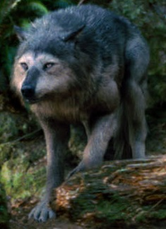 File:Wolves - Copy (2).jpg