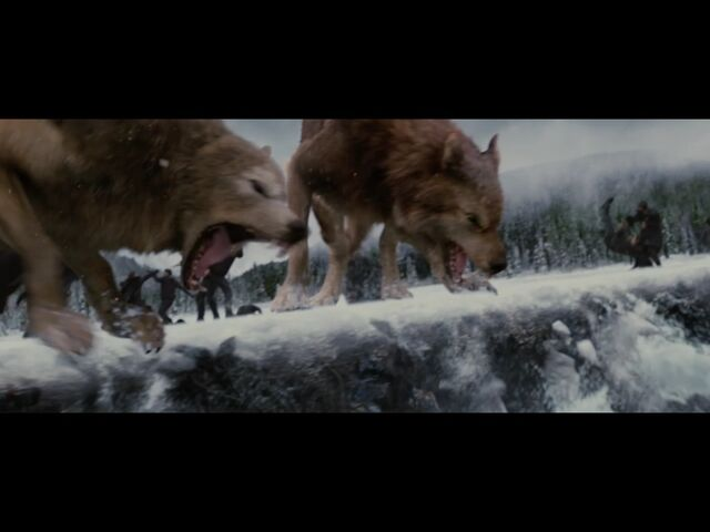File:Young wolves.jpg