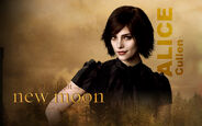Alice Cullen1232