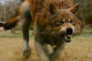 File:New-moon-jacob-wolf.jpg