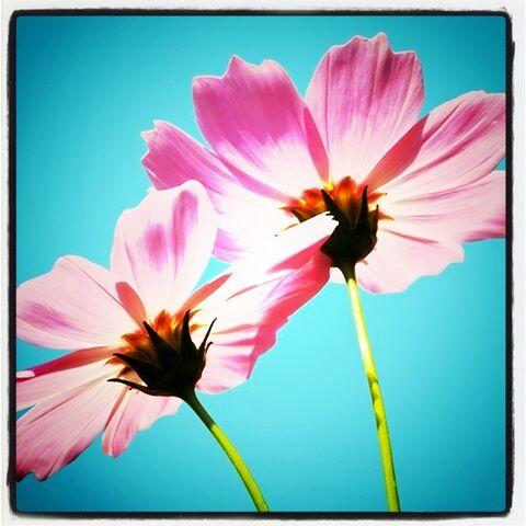File:Pretty pretty flowers..jpg