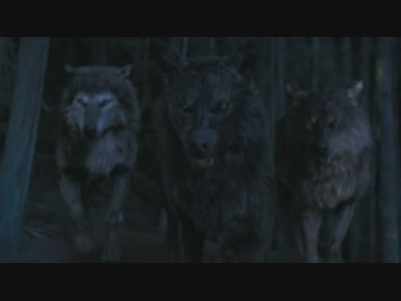 File:Paul sam & jared in wolf form.jpg