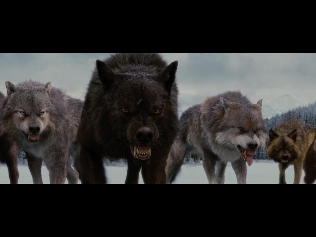 Jared twilight wolf