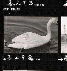 Swan 2 2298