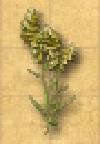 File:Ingredient - Foxglove - Inv.jpg
