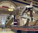 Rexy (Night at the Museum)
