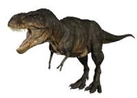 File:Tarbosaurus 06.jpg