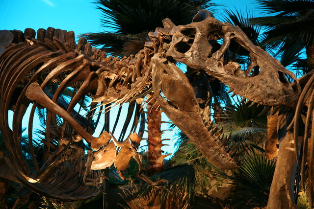 File:Bucky the T. Rex 1.jpg