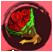Rose -Red-