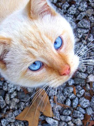 File:Eggcat.jpg