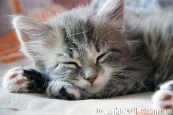 File:Mistkit-thunderclan-kit-warriors-gray-kitten-cats-clan-erin-hunter-1.jpg