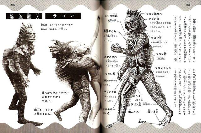 File:Ragon anatomy.jpg