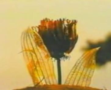 File:T Flower.jpg