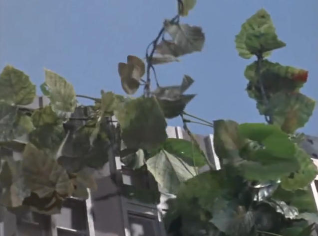 File:Plant Human Monster3.png