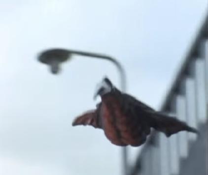 File:Little Mora Flight.png