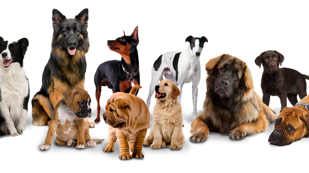 File:Dogs-build-large-group 637.png