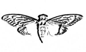 File:Cicada 3301 logo-300x182.jpg