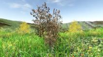 PlantGrowth