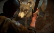 Wolfie4