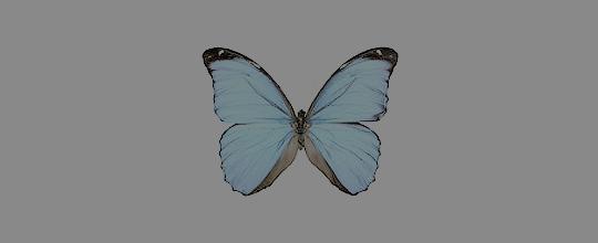 File:Elliebutterflyprofile.png