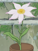 Eruruu flower