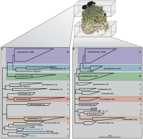 File:Microbial 16S phylogenetic analysis.png