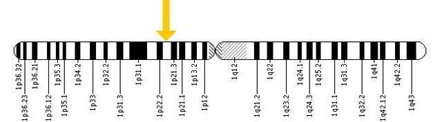 File:ABCA4 ChromoLocal.jpeg