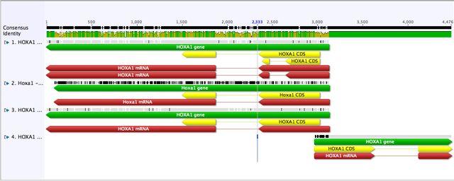 File:HOXA1 Align.jpg