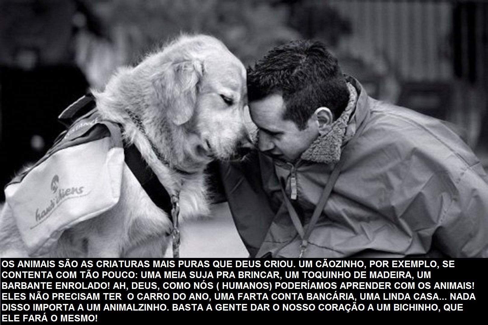 Despedida De Um Cão: Mensagens-sobre-os-caes-melhores-amigos-do-homem