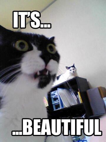 File:Cat its beautiful.jpg