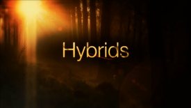 Hybrids03
