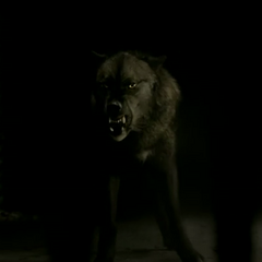 Tyler's wolf form