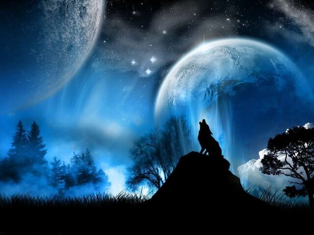 File:Beautiful Wolf.jpg