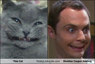 File:This-cat-totally-looks-like-sheldon-cooper-smiling.jpg