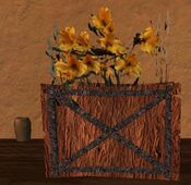 Short square flower pot with yellow flowers