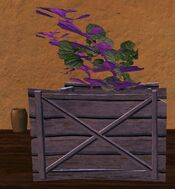 Small wooden planter with purple flowers