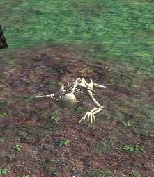 Impromptu Fieldwork skeletal remains