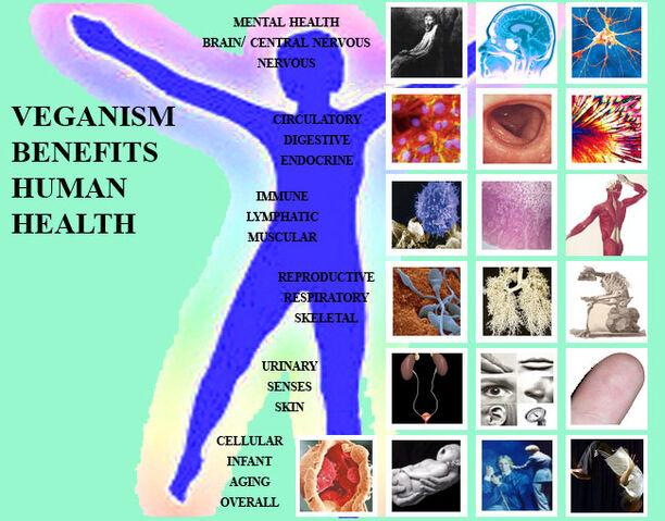 File:Human-HealthWeb.jpg