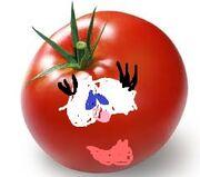 Mom tomato