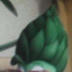 New Mom Asparagus Version 1