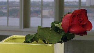 How to make cut roses last longer