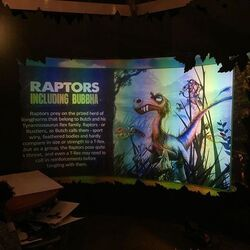 Raptors Information 2