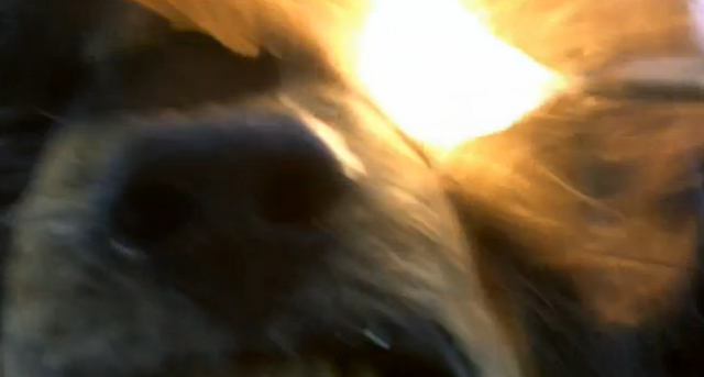 File:Man's Best Friend Max Blowtorch.png