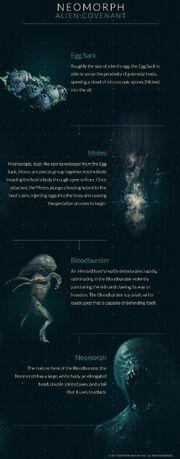 Neomorphs Alien Covenant