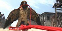 Hawk (Rango)
