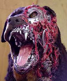 File:Rottweiler.jpg